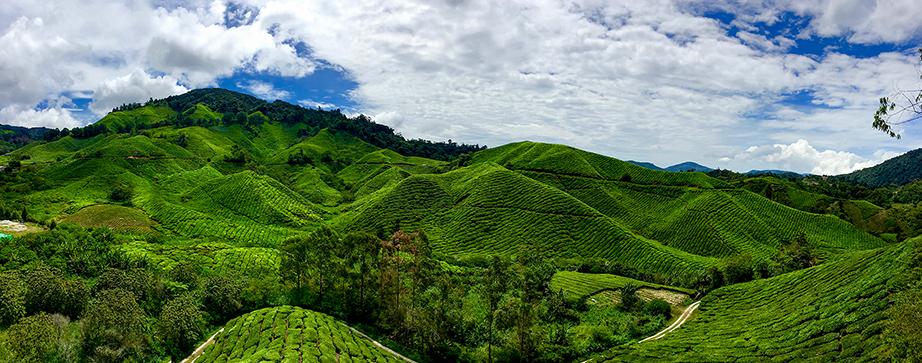 BOH Tea Plantation panview