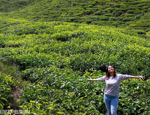 Cameron Highland Agro Tourism - 5 things to do