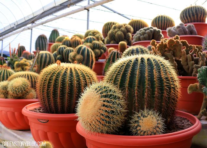 Cameron Highland Cactus Farm